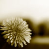 forgive-flower